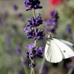 Attracting Nature Critters to Your Garden